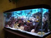 Продам аквариум б/у Juwel Record 160 в хорошем состоянии. Объм 160 л.