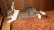 Продам карликового декоративного кролика + клетка,  поилка,  домик.