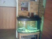 Продам аквариум-срочно!!!