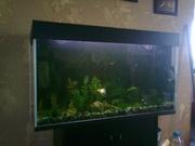 Продам аквариум 200л.