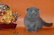 голубой плюшевый вислоухий котик