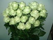 Продам розы,  хризантемы,  срез по оптовым ценам