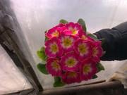 цветы к 14.02 и08.03
