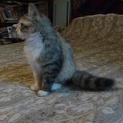 Отдам в хорошие руки серого котика и трехцветную кошечку
